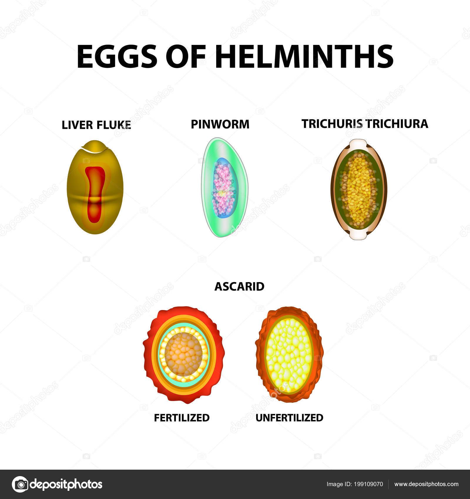 pinworm tojások