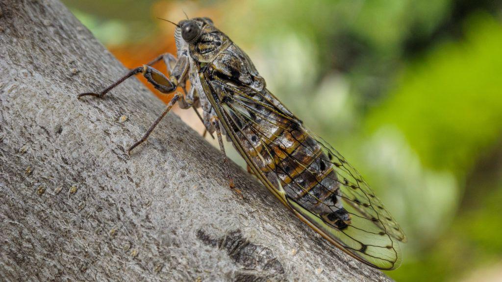Index - Nagykép - Mosómedve-bandita és élőhalott rovar az év természetfotói között