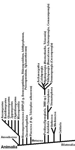gyurusfergek osztalyai paraziták egy személy tünetei kezelési tabletták