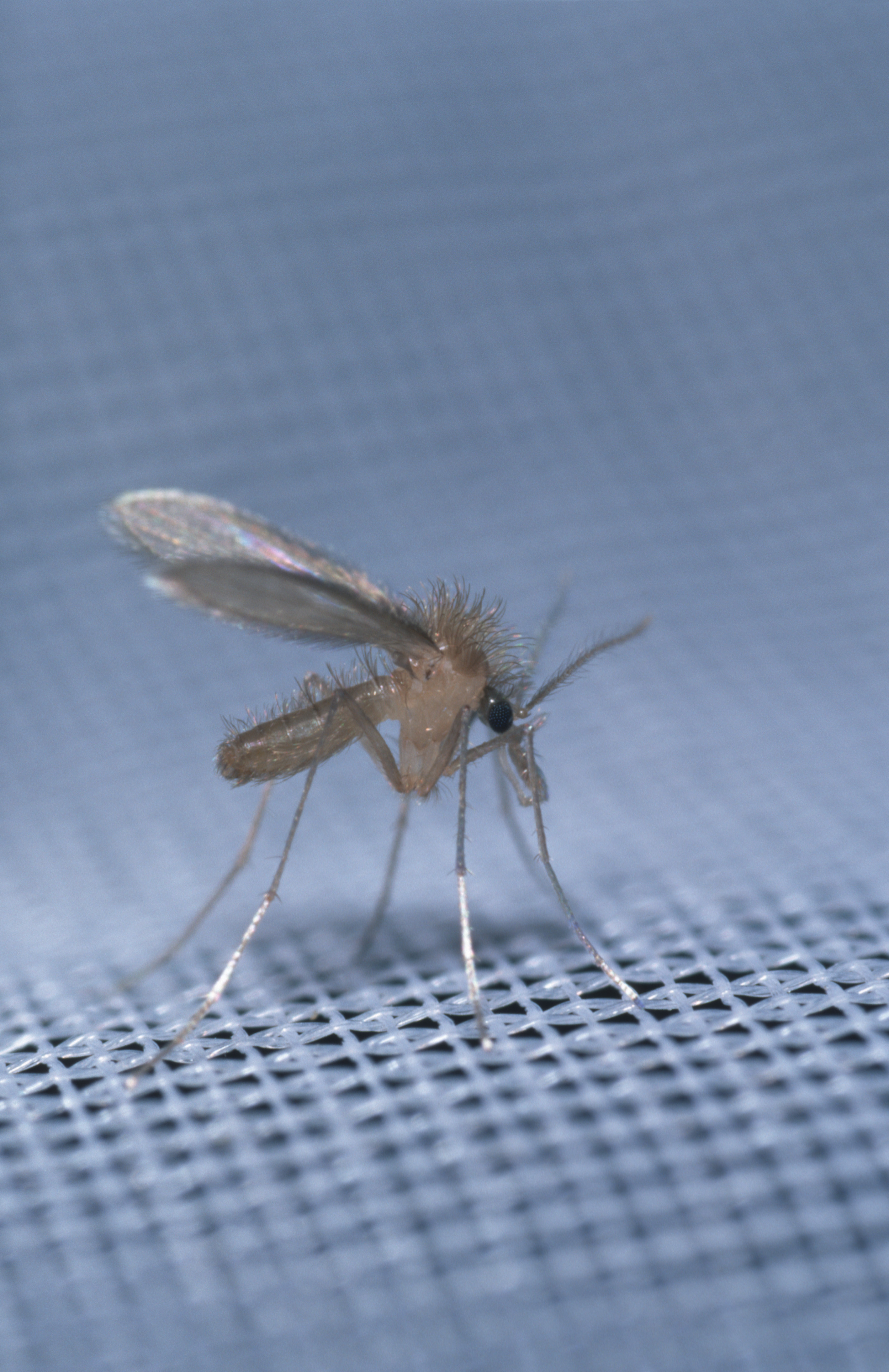 a paraziták leghatékonyabb kezelése