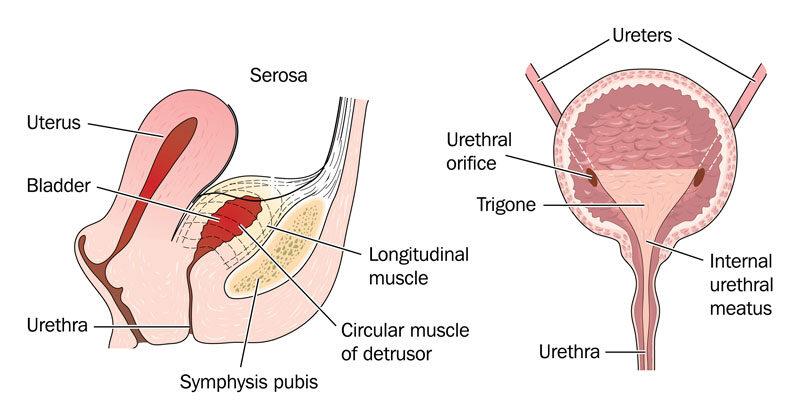 Fájdalmas vizelés? Urológiai vizsgálaton derülhet ki az oka