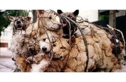 szívféreg tünetei kutyáknál megszünteti a rossz lehelet fórum