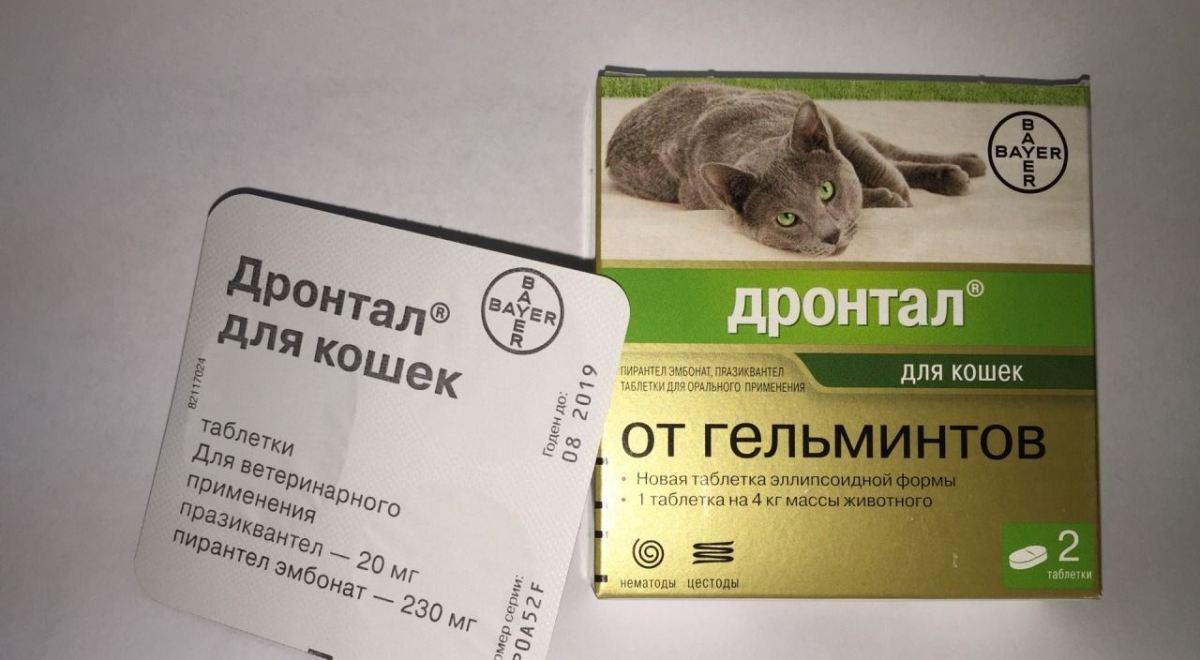 hatékony és biztonságos tabletták férgek számára pasziánsz arcadium