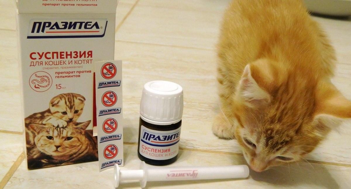 milyen gyógyszerek kezelik a férgeket