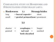 terjedt a strongyloidosis