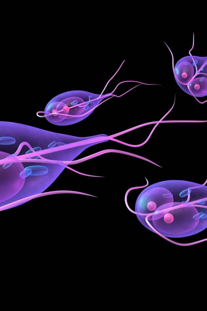 raw diet giardia