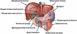 Ami aceton lélegzetet jelent, Férgek az izmokban