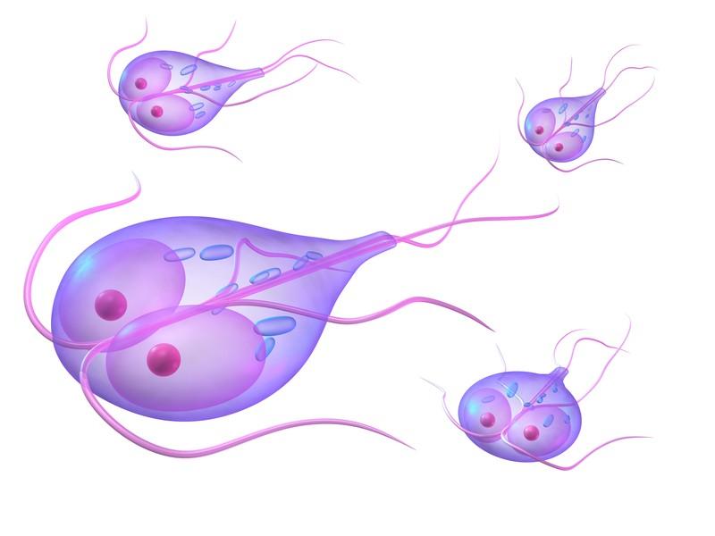 Giardia mens symptomen