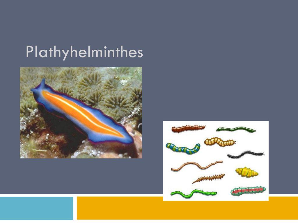 T:Puhatestűek Mollusca. O: Kagylók Bivalvia O: Csigák Gastropoda. - ppt letölteni