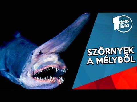Milyen halak az opisthorchiasis, a tengerben, a folyó, a napszárított, a főzés? - Sárgaság