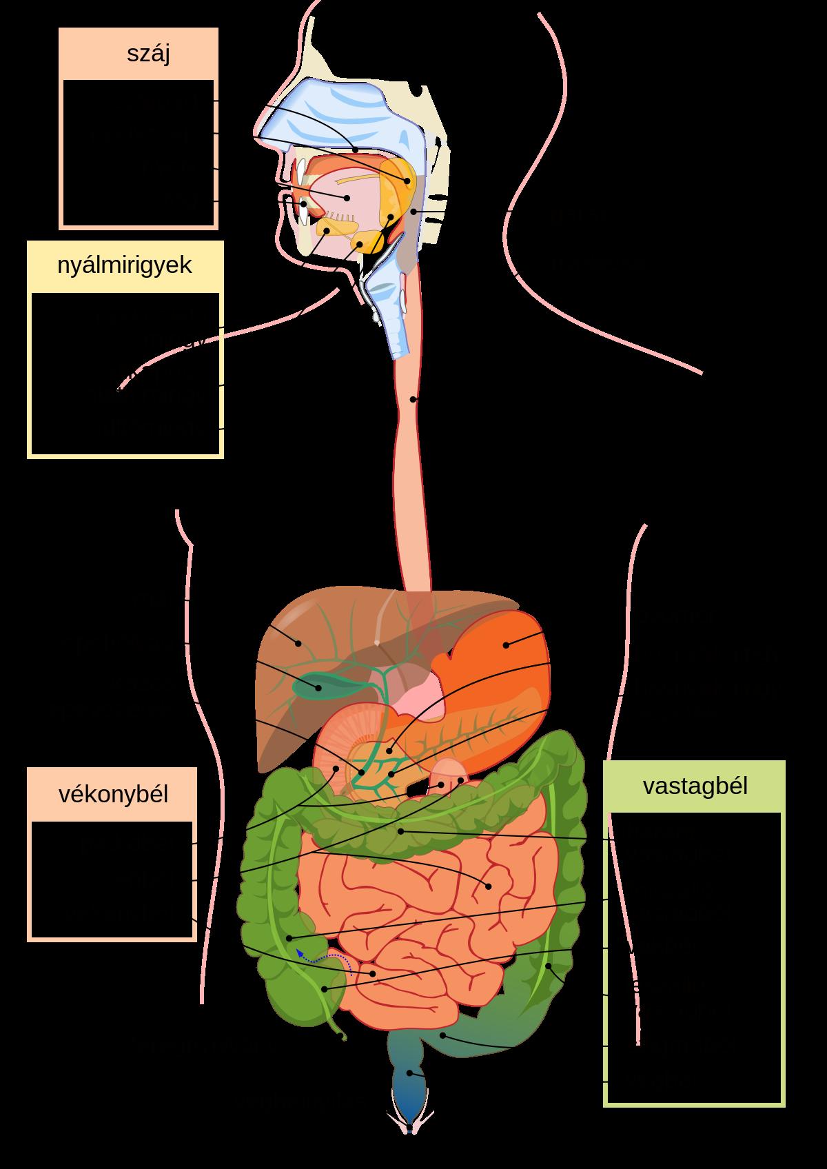 emésztőrendszeri férgek és kezelés