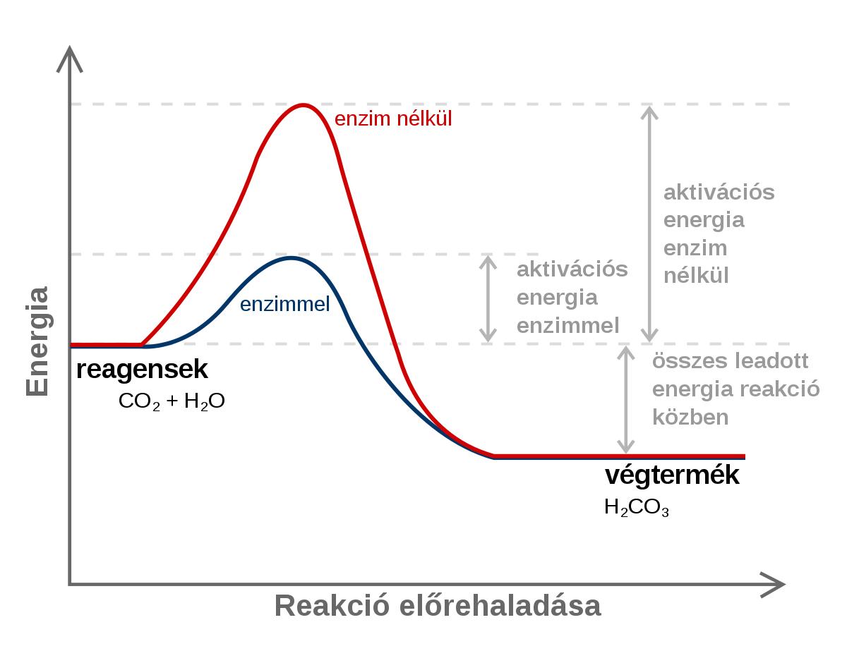 enterobiosis utasítás