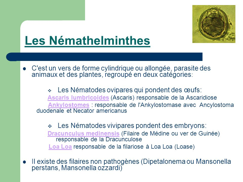 les nemathelminthes