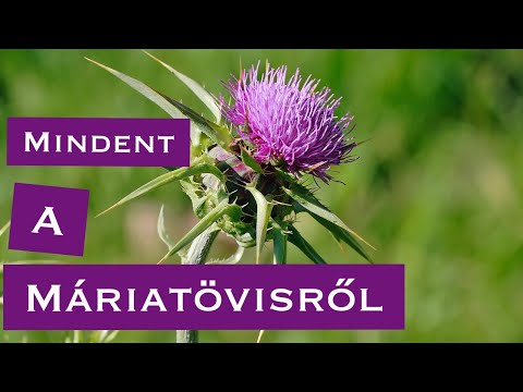 A máj méregtelenítése gyógynövényekkel | TermészetGyógyász Magazin