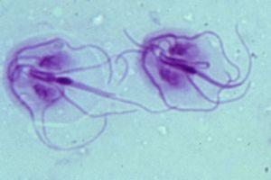 giardia mensen behandeling a kerekférgek pinworms ek