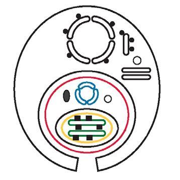 segítség a helminth tojásoknál férgek gyermekeknél alkalmazott tablettákban