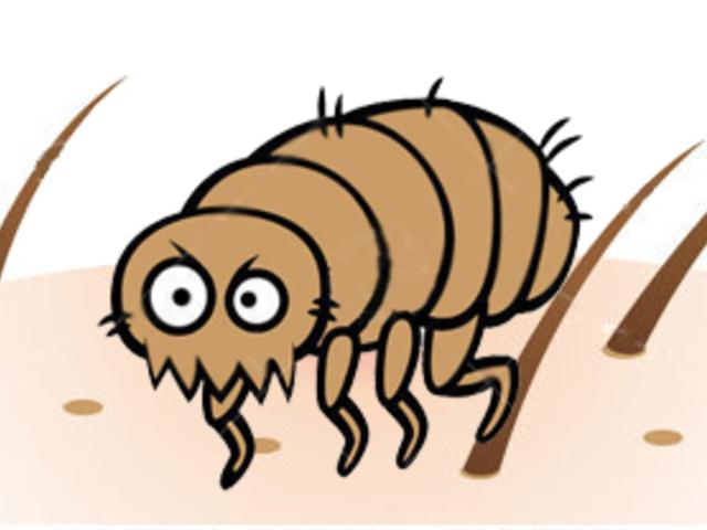 mikroszkopikus bőr paraziták a legjóbb féreghajto