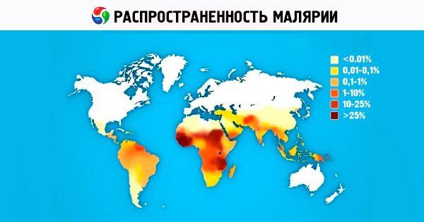 a malária plazmodia eritrocitikus stádiumai