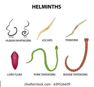 Pinworms - népi jogorvoslatokkal való kezelés - Tünetek May