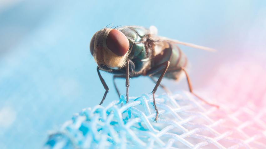parazita kezelés tver вермокс таблетки инструкция по применению