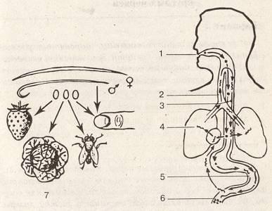 kerekféreg a fej kezelésében