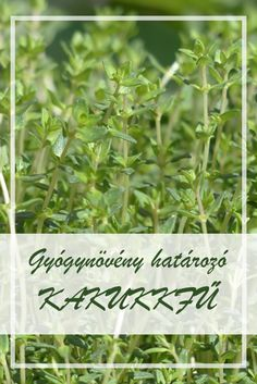 parazitaellenes gyógynövény- gyűjtemény