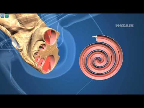 Horoghernyó féreg kezelés Horoghernyó fertőzés