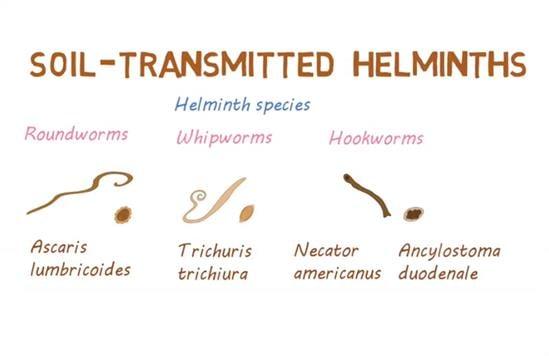 a helminthiasis t kezelik
