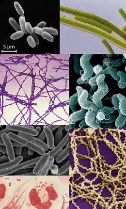 a helminták a baktériumok birodalmában vannak