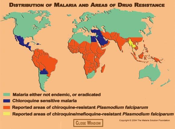 a malária plazmodium ciklusának stádiumai