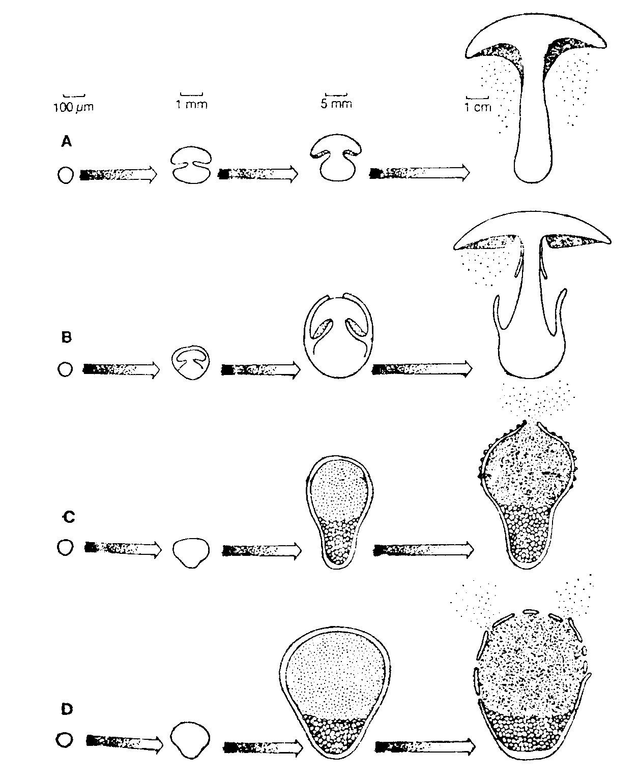 parazita gyógyszer gyerekeknek fórum antropóniás helminthiasis