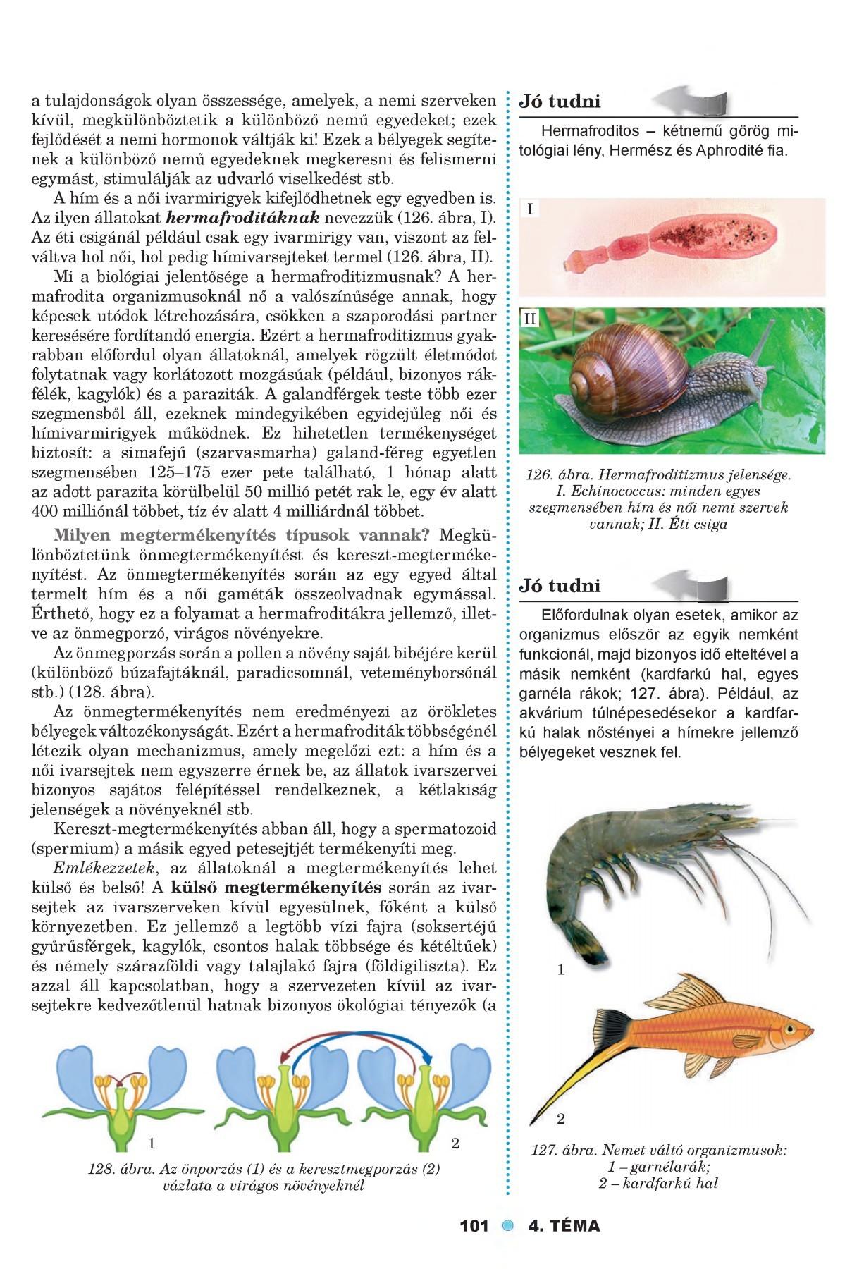 a paraziták szimbiózis példái