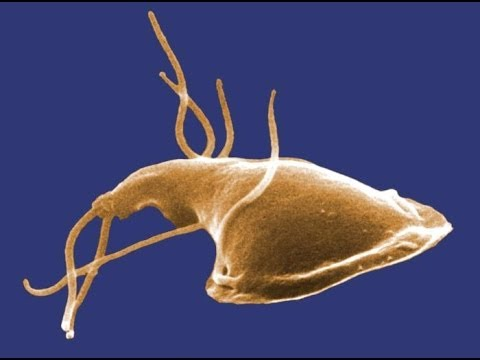 típusú bőr alatti paraziták