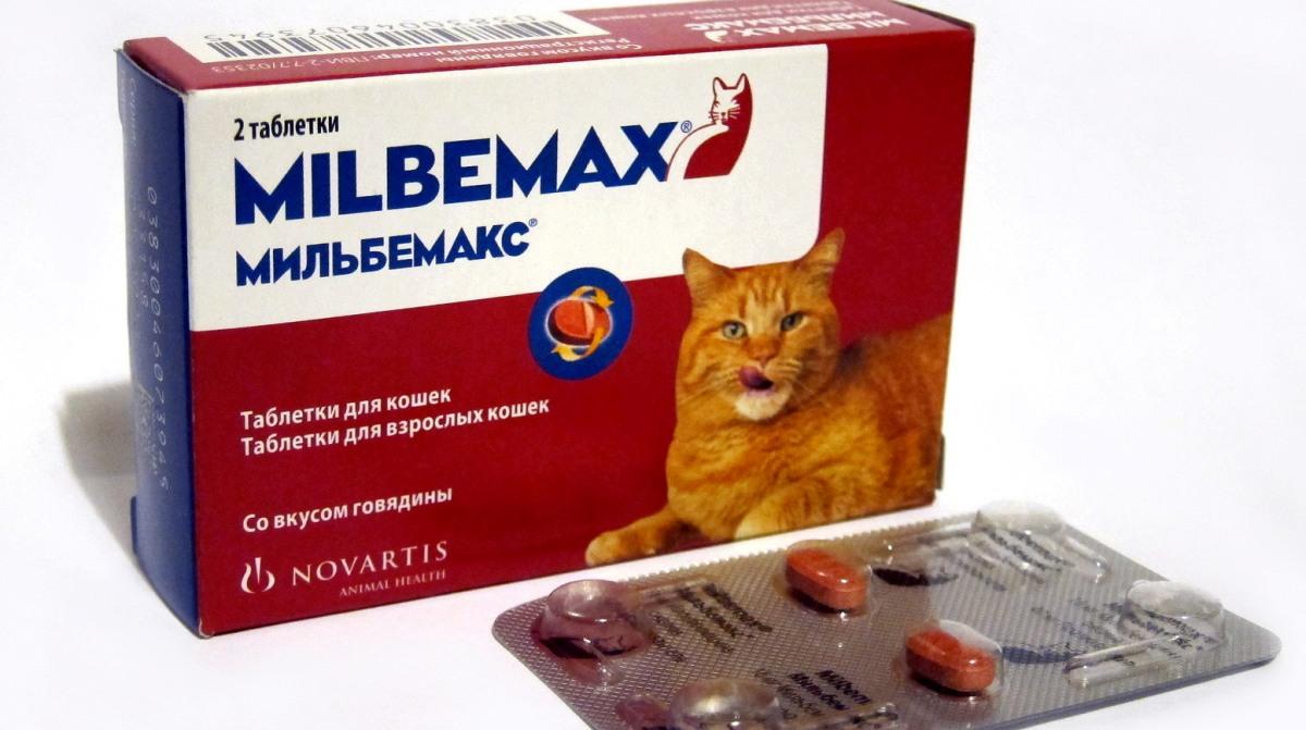 férges macska kezelése házilag