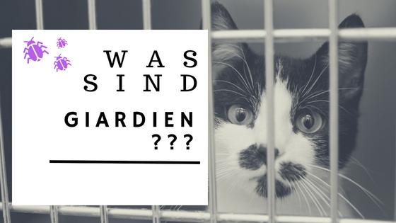 Giardien bei katzen symptome, Giardiasis
