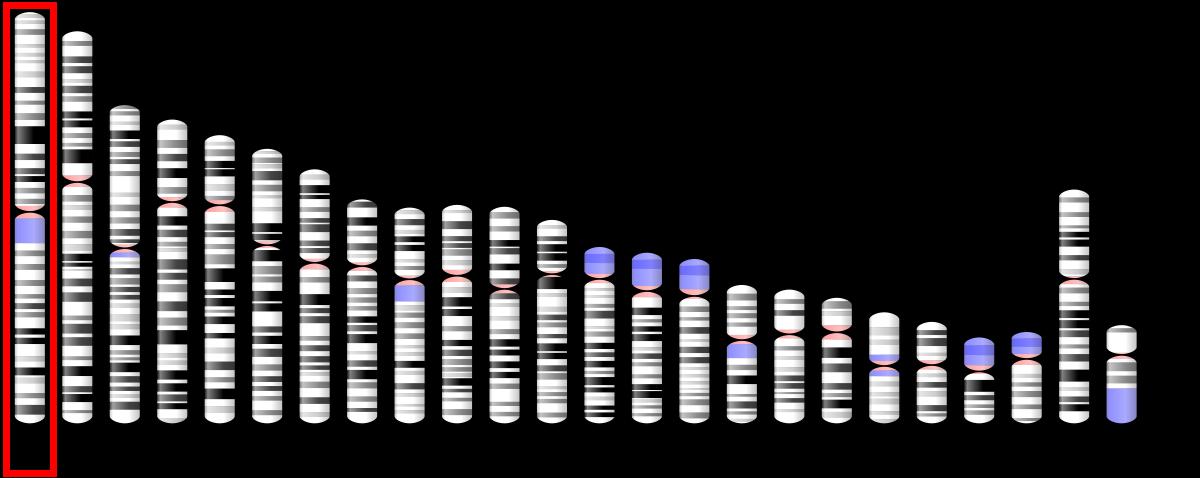 Plasmodium malária antigének