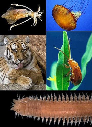 Biológia - évfolyam   Sulinet Tudásbázis