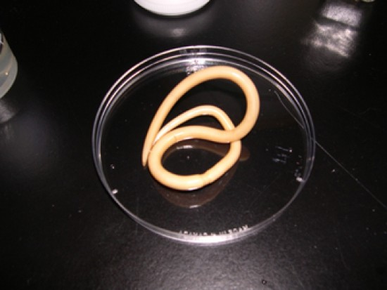 idegen féreg elleni gyógyszerek kétéltű paraziták