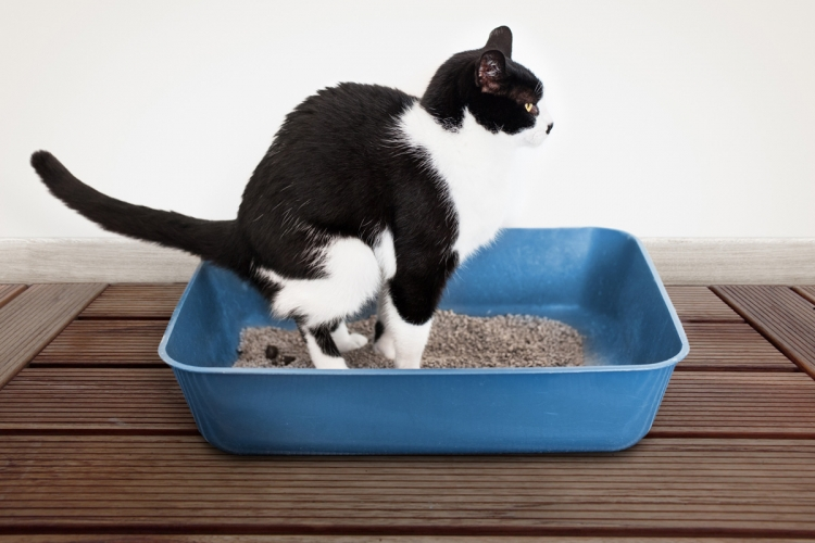 Gyakran előforduló macskabetegségek