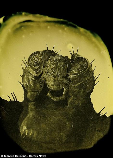 deworming az útlevélben paraziták fekete fehér változat nézni