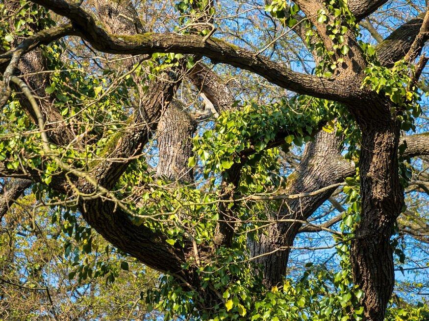 Hasznosak-e az egzotikus fák a városi parkokban?