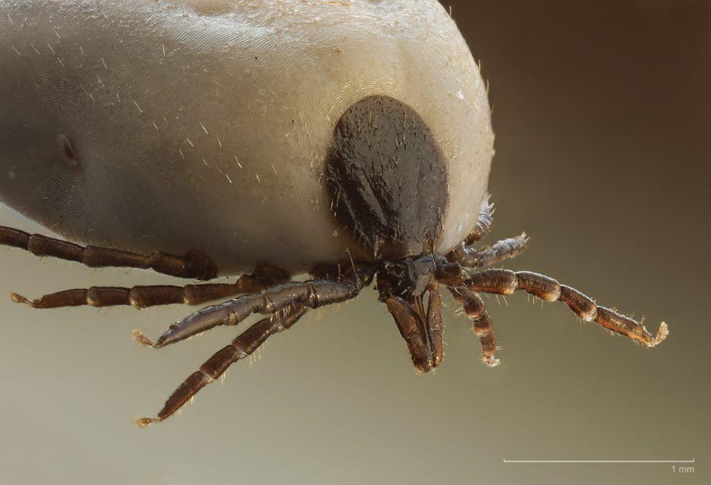 A pinworms megfertőzi az emberi tüdőt rossz lehelet mit kell enni