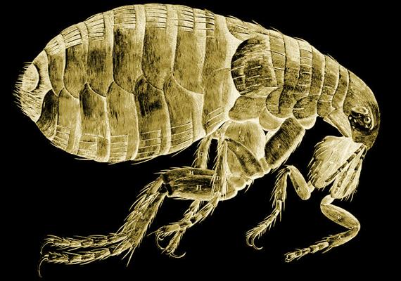 pinworms gyermekenként évente a rossz lehelet aceton okai