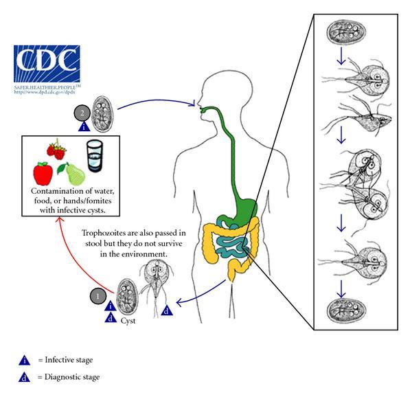 féreg elleni gyógyszerek 2 évesnél fiatalabb gyermekeknél agy méregtelenítő gyakorlata