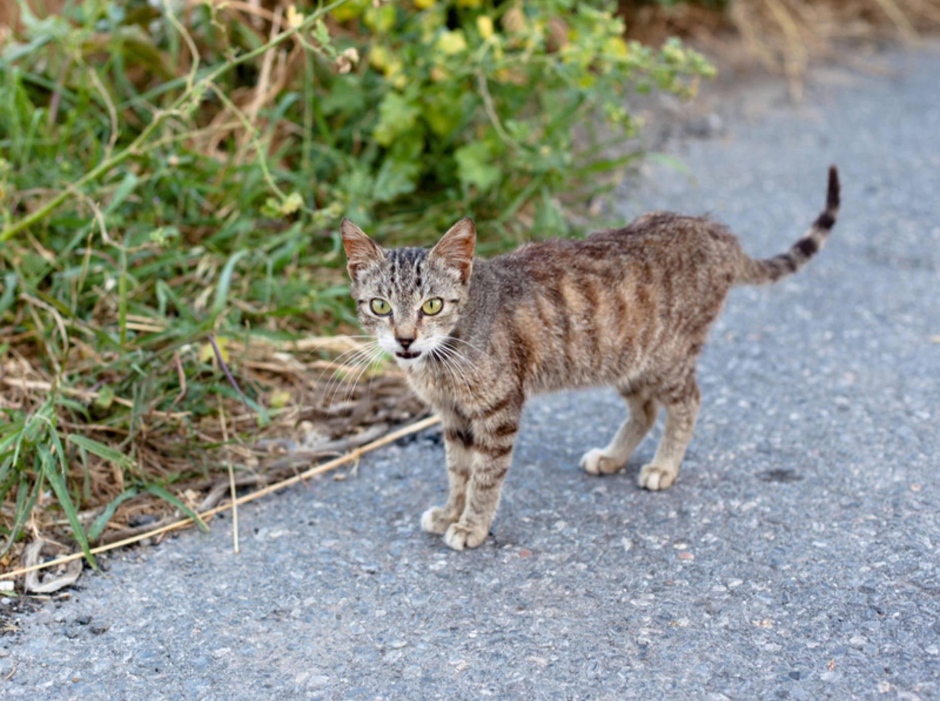 Giardien bei katzen erkennen, Behandlung von Giardia ohne Gallenblase