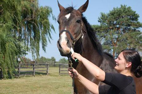 ló köhögés férgek nem gyógyszer féregkészítmények nsp