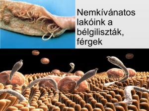 parazita közeg