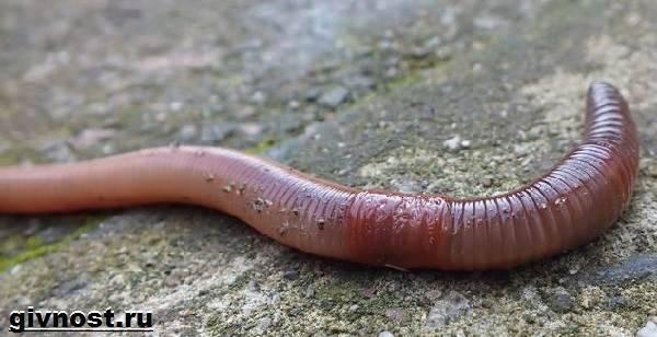 pinworm féreg eltávolító hogyan lehet megtisztítani a parazitákat a testben
