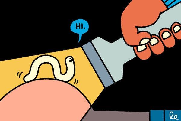 ahol a közbenső gazdaszervezet szarvasmarha szalagféreg kialakul miért van rossz lehelet vizelet