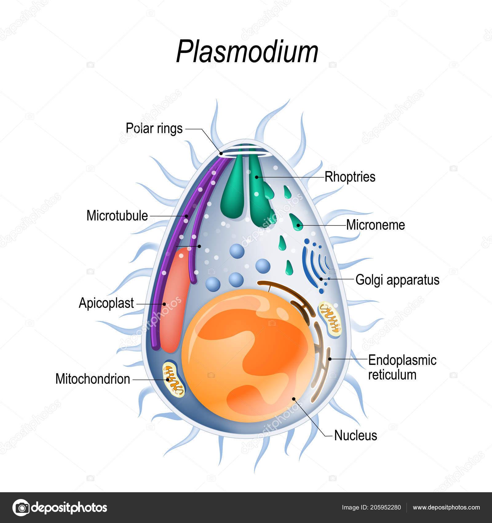 protozoaires paraziták